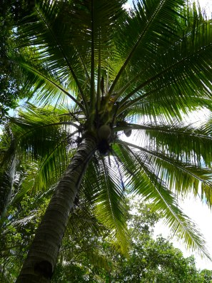 Futuna 533